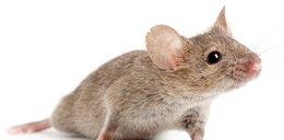 To są studenci? Zabili mysz w mikrofali i wrzucili film na YouTube