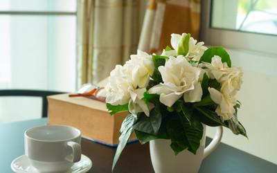 Gardenia W Doniczce Jak Ją Uprawiać By Kwitła Przez Długi