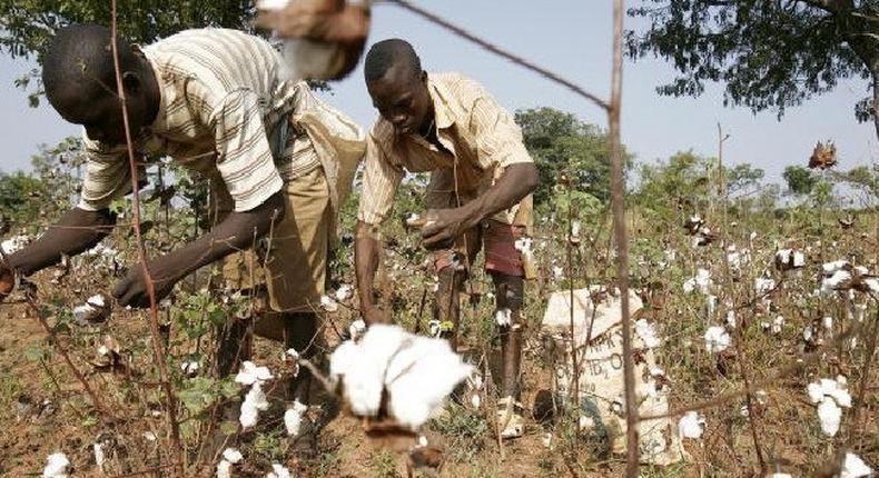cotton farners