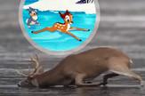 bambi kombo