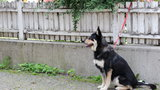 Kontrowersyjny pomysł w Warszawie. Pod urzędami parkingi dla... psów?!
