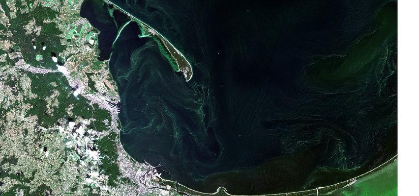 Zapomnijcie o kąpielach w Bałtyku! Sinice atakują,widać je nawet z kosmosu