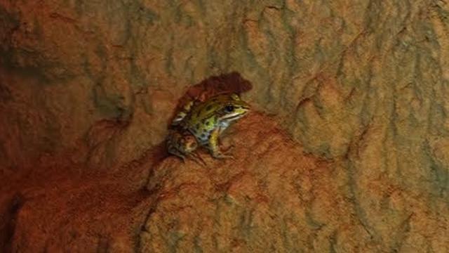 Oči i pokreti u mraku: Tuneli su puni žaba