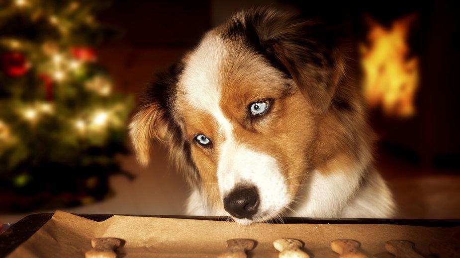 Psie przekąski można przygotować samodzielnie - Photo-SD/stock.adobe.com