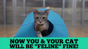 Pięć sprytnych wskazówek dla miłośników kotów