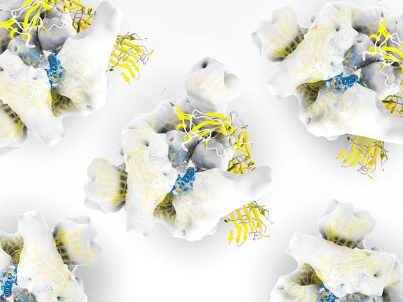 Ilustracija strukture šiljatog proteina S kojeg virus koristi