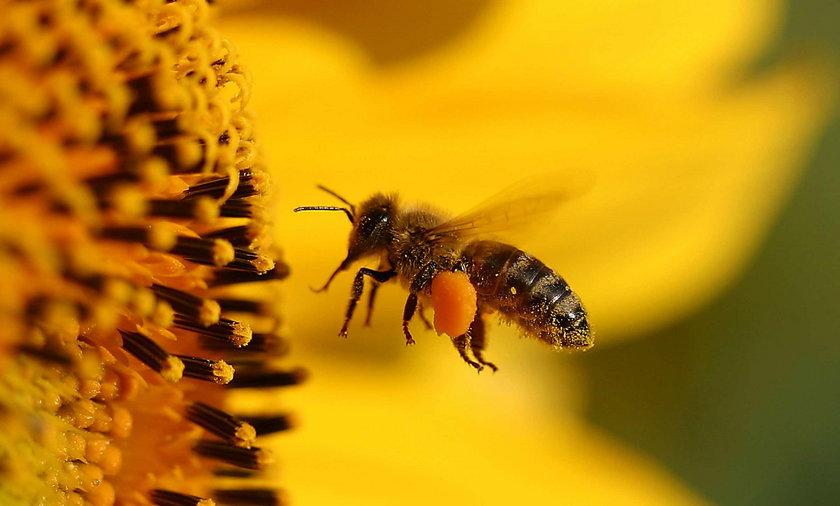 W Lublinie będą hotele dla pszczół