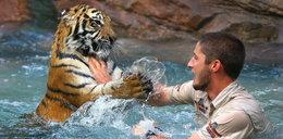 Wskoczył do wody pełnej tygrysów. Oto, co się wydarzyło