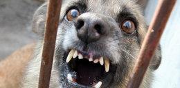 Pies w ciągu dnia zaatakował dwoje dzieci. Amstaff był pod opieką...