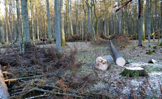 Dopytywany, czy rząd dostosuje się do decyzji UNESCO, jeśli zostanie ona dostarczona Bochenek stwierdził, że wszelkie działania, które są podejmowane w Puszczy Białowieskiej przez polski rząd poprzez resort środowiska służą ochronie tej puszczy i ratowaniu całego drzewostanu, który się tam znajduje.