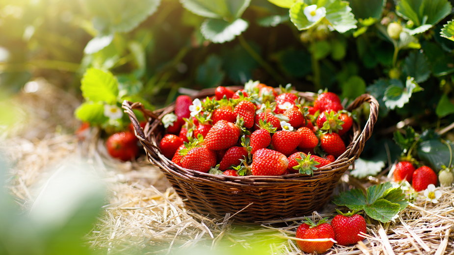 10 przepisów na dania z truskawkami