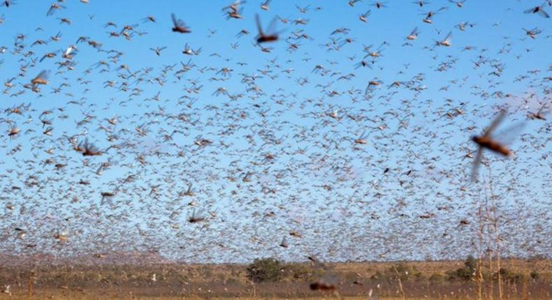 Locusts are a punishment from God – declares US pastor