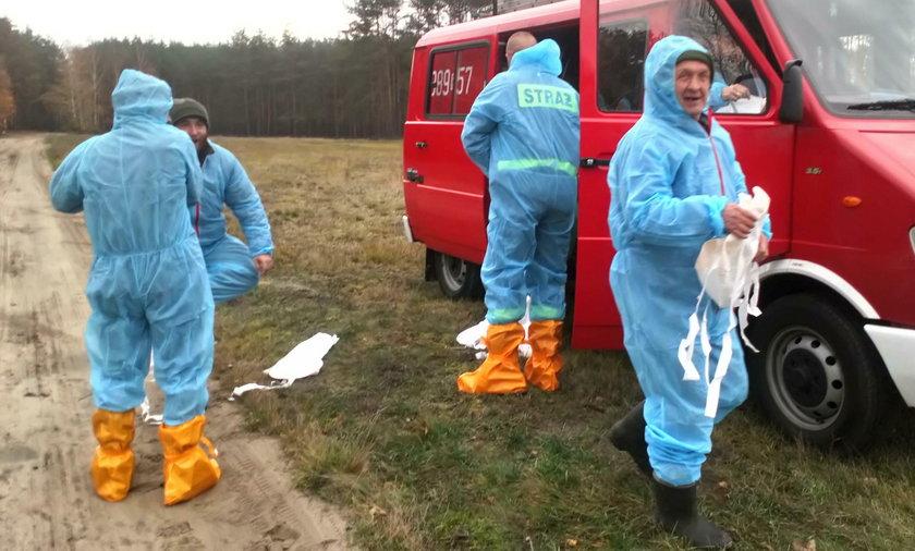 Rolnicy na zlecenie powiatowego weterynarza szukali martwych dzików i nie dostali pieniędzy