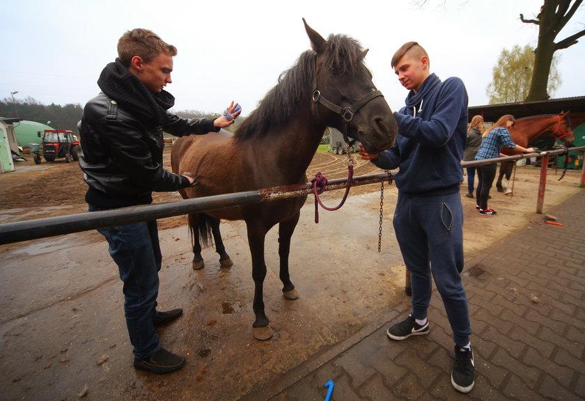 Nowy kierunek w łódzkiej szkole: hodowca koni