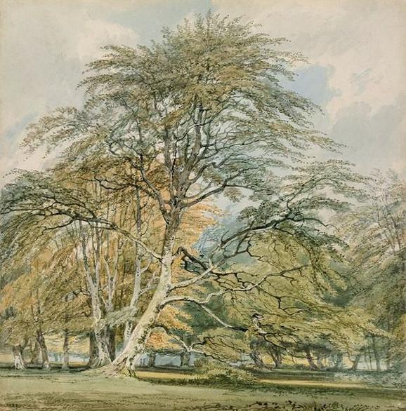 Stabla bukve u parku Norberi, Sari, oko 1797.