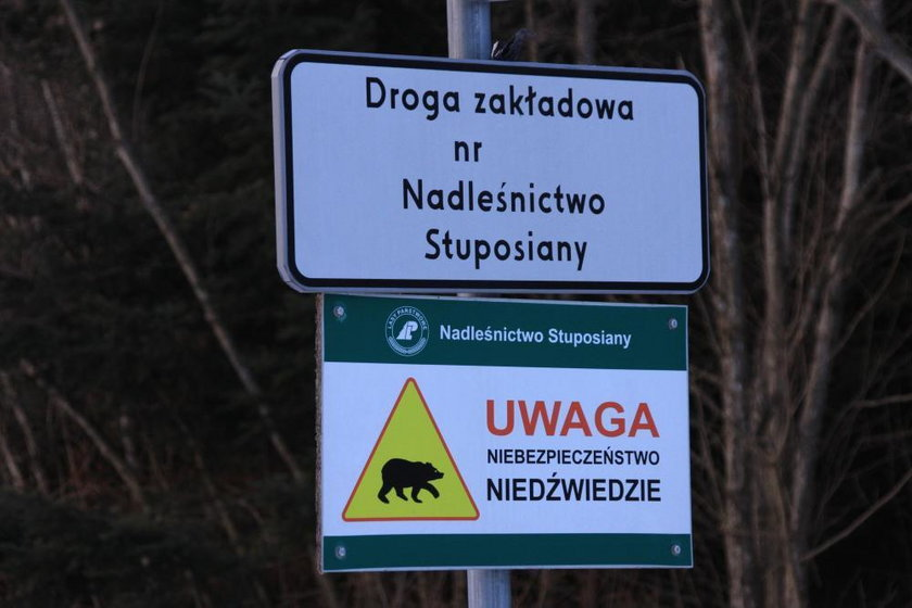 Uwaga! Niedźwiedzie!