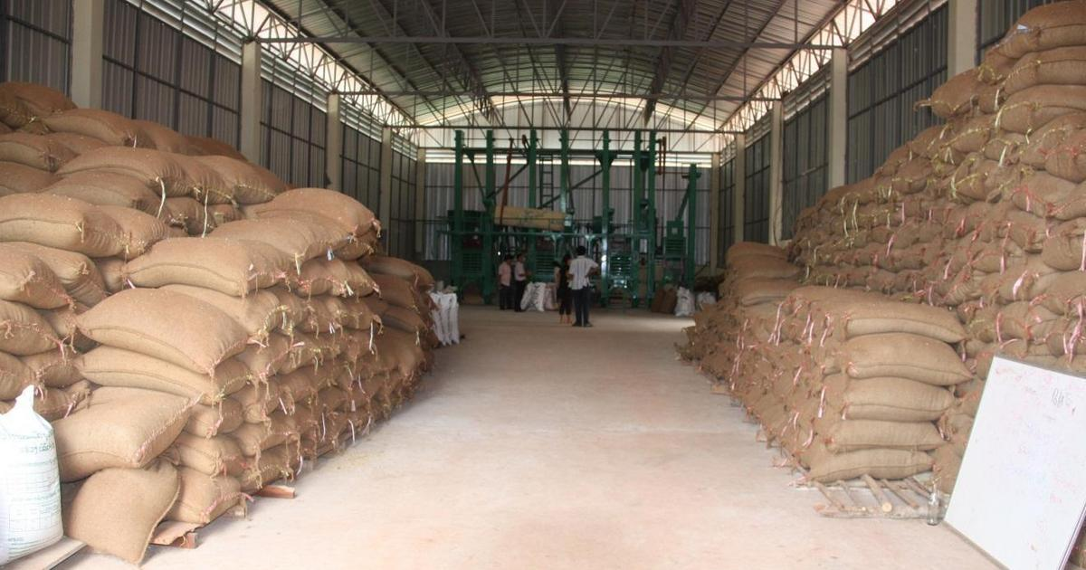 Gombe rice millers reaping benefits of border closure - Pulse Nigeria