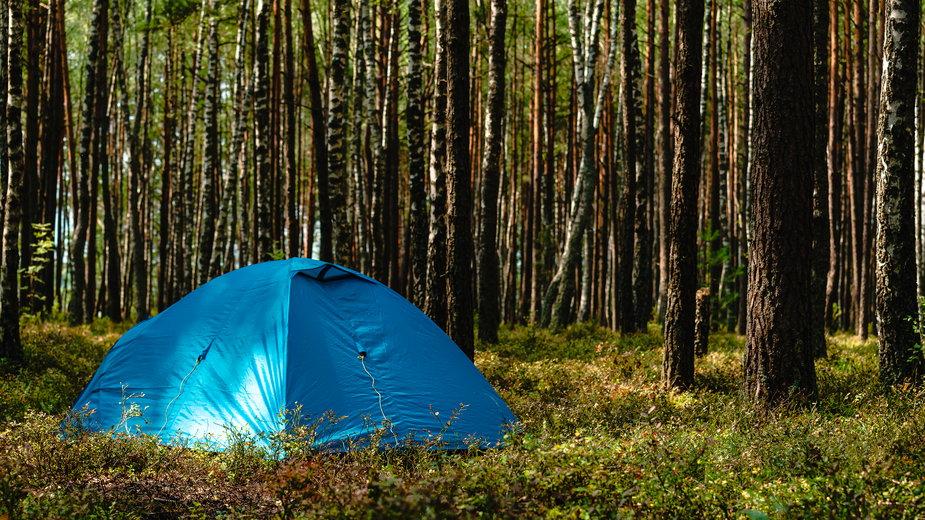 Specjalne obszary do nocowania w polskich lasach dostępne od 1 maja