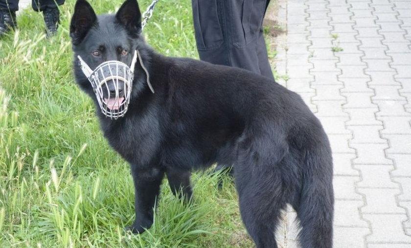 Policja ma nowego psa tropiciela