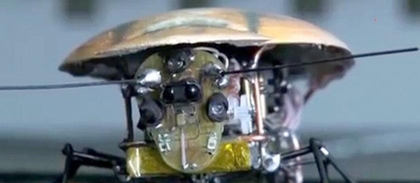 Pancerz karalucha robota