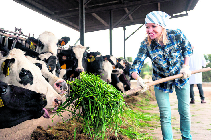 stock-photo-professional-young-woman-taking-care-of-cows-in-cows-barn-735842902