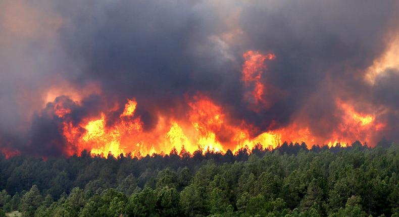 Throughout the past five days, winds and extremely dry conditions have burnt hectares of moorlands at Mount Kenya.