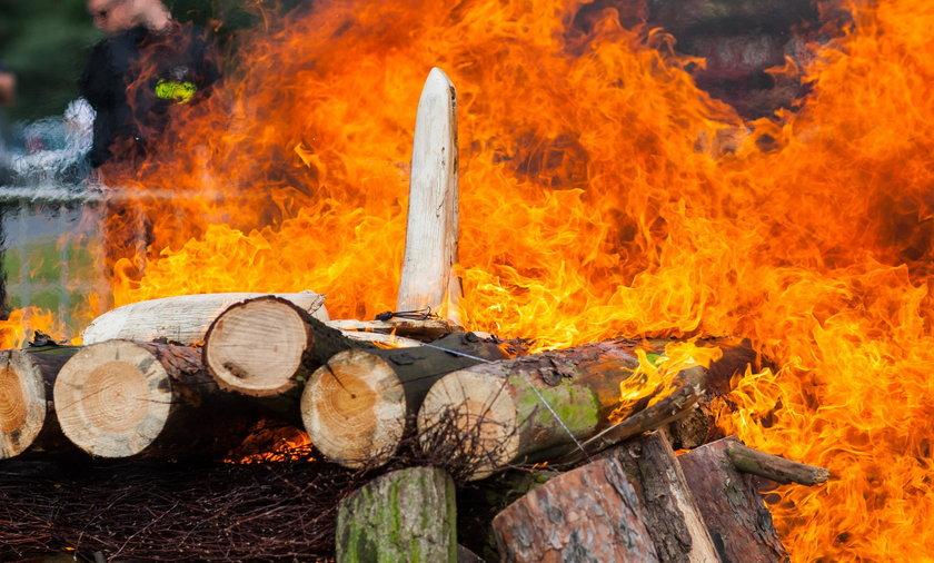 Damięcki spalił kość słoniową w poznańskim zoo