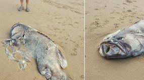 Niezwykłe znalezisko na australijskiej plaży