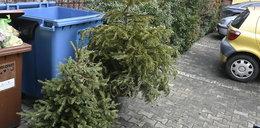 Co zrobić ze świątecznym drzewkiem?