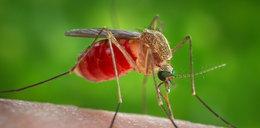 Tym zarażają komary. Nie tylko malarią
