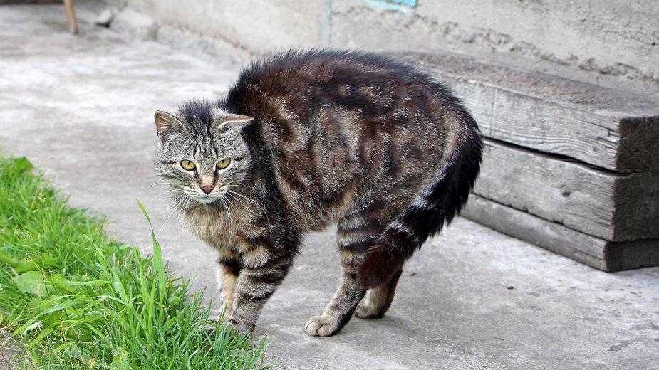 Wścieklizna to choroba niebezpieczna nie tylko dla zwierząt, ale i dla ludzi - Olga Ivanova/stock.adobe.com
