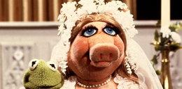 Miss Piggy bierze ślub. Wychodzi za...