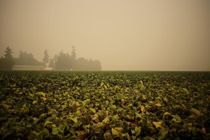 Zagađenje vazduha u Koltonu u Americi