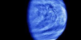 Sensacyjne odkrycie naukowców. Ślady życia na Wenus?