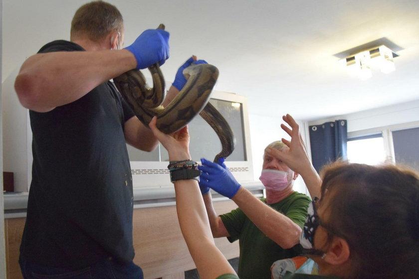 Poznań: Policjanci znaleźli groźne węże w mieszkaniu