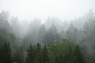 Zakaz wstępu do lasów ma znaleźć się w rozporządzeniu Rady Ministrów