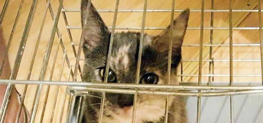 Porwali jej ukochaną koteczkę! Policjanci odbili ją razem z drapakiem