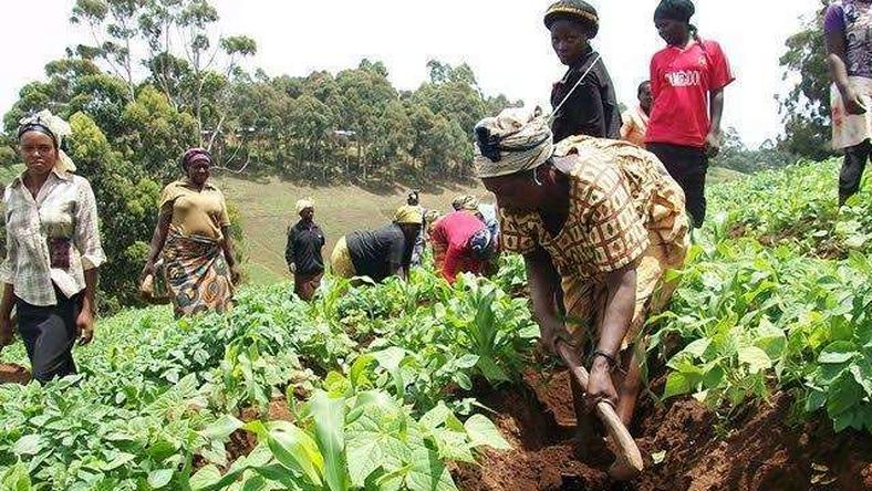 Pressure mounts on gov't to scrap 12.5% tax on agribusiness