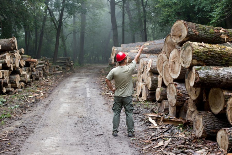 suma-drvo-foto-shutterstock-1-e1568374794401