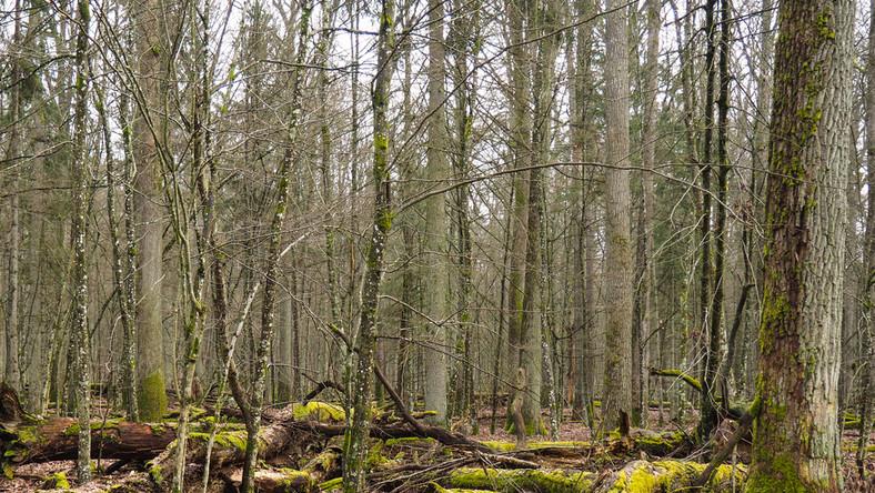 Zwłoki ukryto w lesie