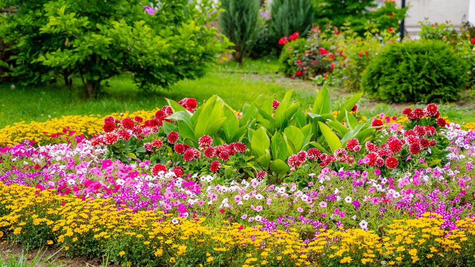 Do stworzenia klombu najlepiej wykorzystać różnorodne rośliny - Vadim/stock.adobe.com
