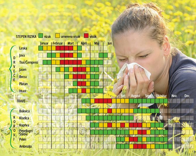 Ambrozija sve ranije počinje da cveta i sve kasnije prestaje, što takođe povećava količinu i trajanje polena u vazduhu nad celom Evropom