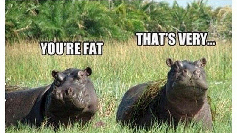 Aninimal Book: Funny 9 hilarious animal jokes that would make you LOL so ...
