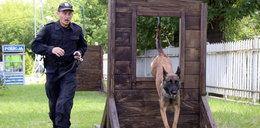 Tak się szkolą policyjne psy