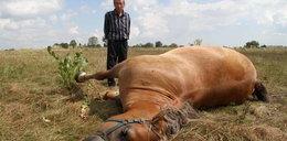 Co się stało na polu? Martwy rolnik, martwy koń!