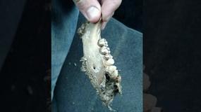 Znaleziono tajemniczy fragment ludzkiej szczęki