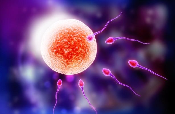 W Polsce brak ustawy, która regulowałaby in vitro.
