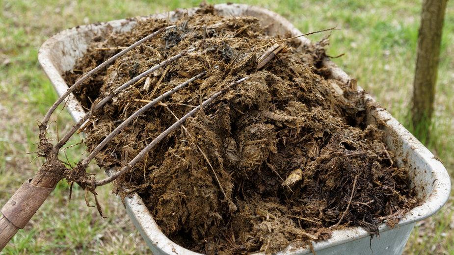 Obornik to naturalny nawóz, który doskonale sprawdza się do zasilania roślin - Kondor83/stock.adobe.com