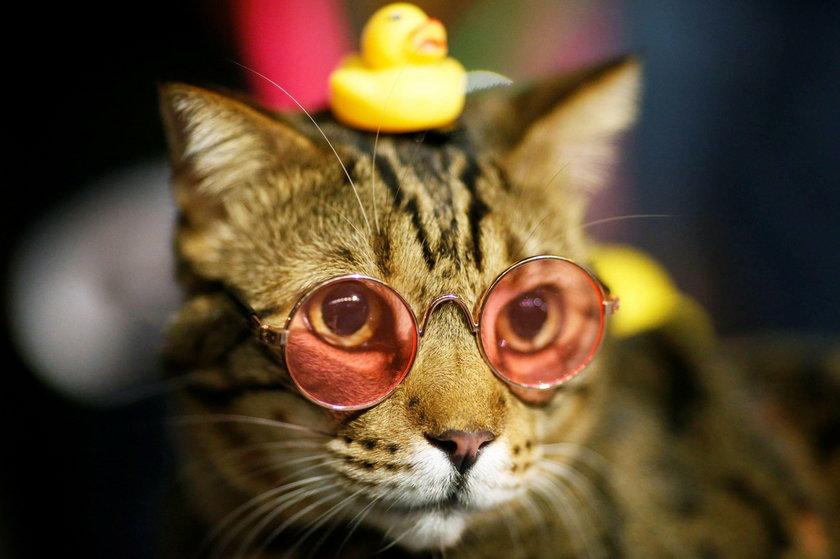 Indonezja: krawcowa szyje szalone stroje dla kotów