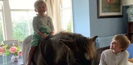 Ten koń mieszka z rodziną w domu. Bawi się w salonie i wyjada z lodówki